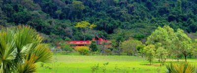 Frangipani Natureza